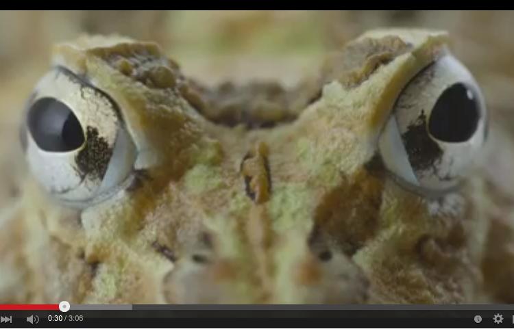 Video: Ecuador Sapodiverso