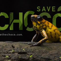 SAVETHECHOCO_FLICKR.COM